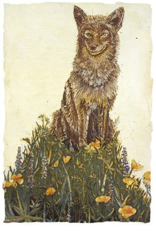 The Original Spring Coyote